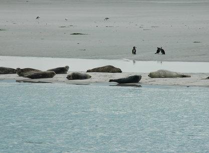 Bree Sant zeehonden